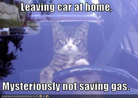 funny-pictures-cat-drives-your-car-when-you-go-to-work.jpg